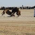 tunesien-reise18
