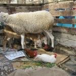 tunesien-reise22