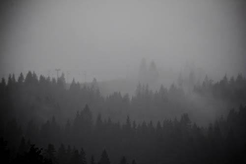 Nebelverhangene Karpatenhänge