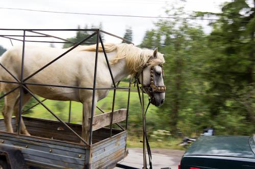 Pferdetransport auf karpatischen