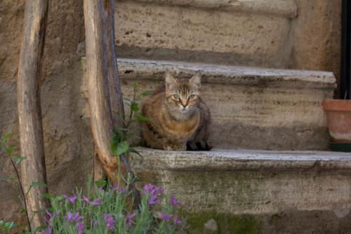 Katzenkontent II