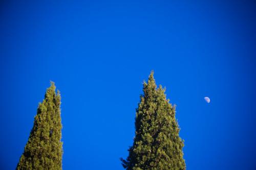 Hermdorf schreibt, daß Schopenhauer schreibt daß Zypressen die Kretins unter den Bäumen sind. Egal …