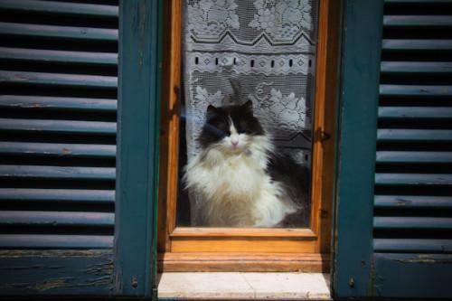 Katzencontent I