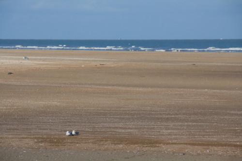 Endlich mal das Meer! Aber natürlich viel Schlick davor.