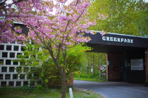 Sakura an der Einfahrt, einfach rein, am nächsten Tag zahlen