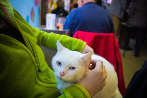 Und die obligatorische Katze zu Besuch.
