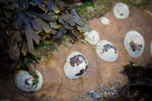 Stundenlang durch die Felsen krabbeln …