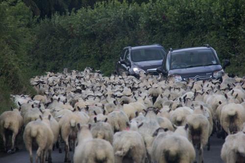 Feierabendverkehr im Hochmoor