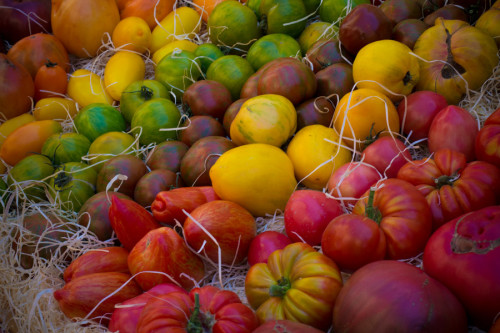Wieviele Sorten Tomaten kann man zum Frühstück essen?