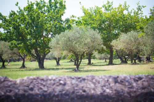 Ob wir uns nicht doch noch einen Olivenbaum fürs Wohnzimmer mitnehmen?