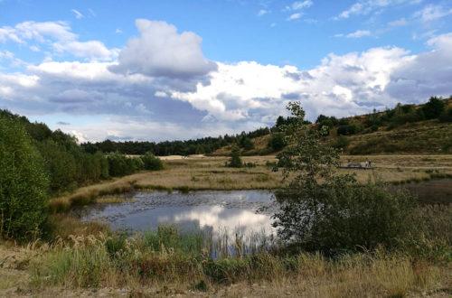 Nationalpark Wanderung Hoge Kempen