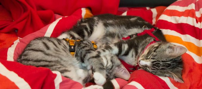 Auftritt Schmitzkaters, Pösslchens Womo-Katzen