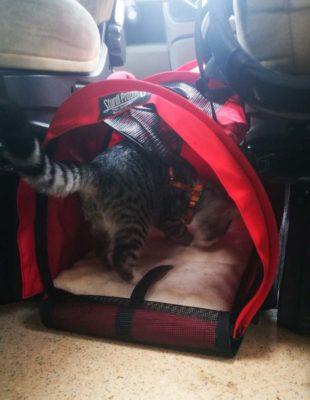 Katzen im Womo Tasche