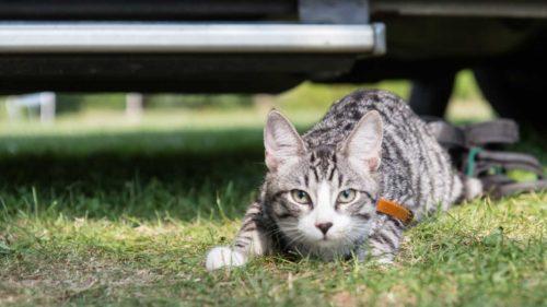 Womo Katzen Campingplatz