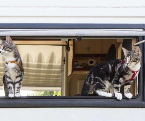 Dritter Ausflug mit den Womokatzen