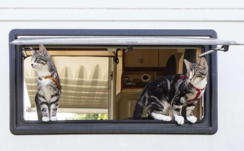 Womo Katzen schauen aus dem Fenster