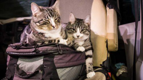 Katzen im Womo