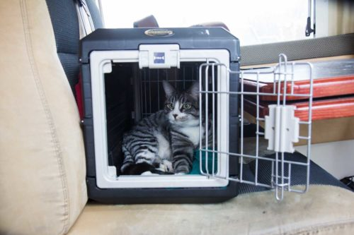 Wohnmobil Transportbox Katzen